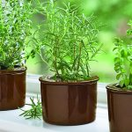 Top 5 beneficial plants and herbs you can grow from your condo